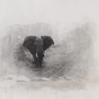 1. LIS 2African_elephant_charging